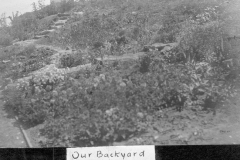 Our Backyard 1914