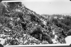 Close-up of Garden
