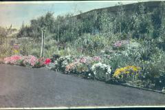 Colourized Photo of Yard