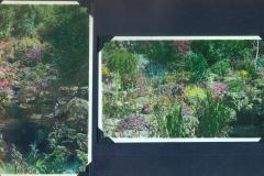 Garden in colour